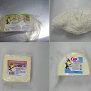 Производство сыра. фото