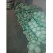 Продам оптом капусту 1,5-3 кг белорусскую от ПРОИЗ фото