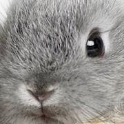 Регистрация ветеринарных препаратов и кормовых добавок в Украине и России фото