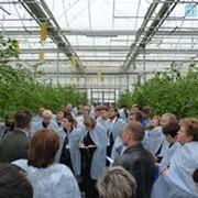 Консультации агронома по выращиванию растений в теплицах фото
