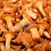 Грибы солёные природные, Россия: маслята, рыжики, опята, лисички,валуи, коровники фото