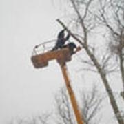 Пилка аварийных деревьев фото