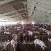 Реконструкция и строительство животноводческих комплексов фото