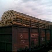 Оформление документов на экспорт пиломатериалов, леса - дуб, бук, ель, сосна фото