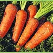 Морковь Оптом в Украине фото