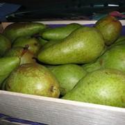 Груша Конференция и другие фрукты из Голландии фото