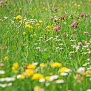 Лекарственные травы фото