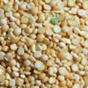 Крупа пшеничная Артек, твердый сорт фото