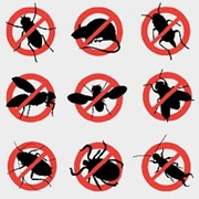 Борьба с комарами в Актау фото