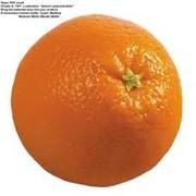 Апельсин (Испания) фото