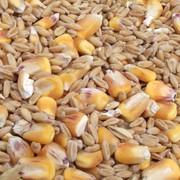 Выращивание зерновых культур Сумы фото