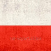 Экспорт в Польшу фото