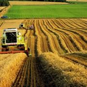 Разработка бизнес-планов, финансовых моделей сельскохозяйственных объектов фото