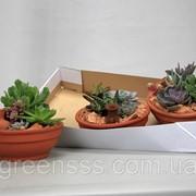 Композиция суккулентов -- arrangements Succulenten фото