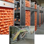 Ленты яйцесбора. Системы сбора яиц производства компании Big Dutchman. фото