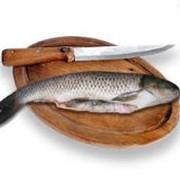 Рыбопереработка.Торговый Дом Палитра фото