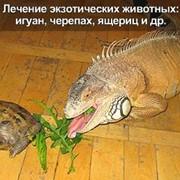 Ветеринар Герпетолог фото