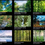 """Готовые швейцарские фотообои """"Природа-Лес"""" 366х254 см. Бесплатно доставка по Украине! фото"""