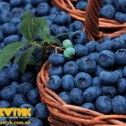 Свежие ягоды Голубика Код: 6001, импортная продукция ОПТОМ фото
