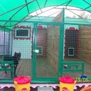 Зоогостиницы для собак фото