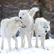 Трофейная охота в Северных провинциях Канады фото