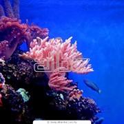 Изготовление аквариумов на заказ фото