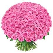 101 роза фото