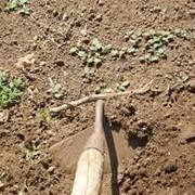 Подготовка почвы для посадки сада фото