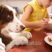 Пищевые добавки для собак фото