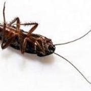 Уничтожение тараканов 100% гарантия и безопастность фото
