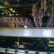 Цыплята-бройлеры 1 кат. ГОСТ РБ, 1.8-2.3 кг фото