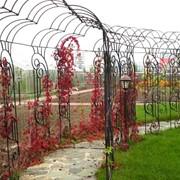 Арки для вьющихся растений фото
