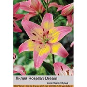 Лилия Азиатский гибрид двухцветный Rosella's Dream фото