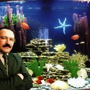 Обслуживание и чистка аквариумов фото