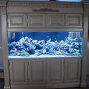 Изготовление морских и пресноводных аквариумов фото