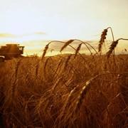 Проектировании и внедрении новых, современных технологий в переработке продукции сельского хозяйства. фото