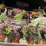 Цветы, озеленение летних площадок, балконов ресторанов, кафе фото