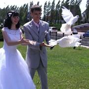 Запуск голубей на свадьбу фото