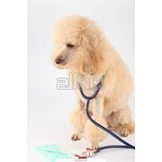 Диагностика и обследование животных фото