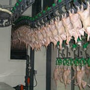 Мясо птицы механической обвалки фото
