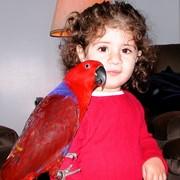 Благородный попугай - ручные птенцы из питомников ФРГ фото