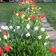 Подкормка цветников Кишинев фото