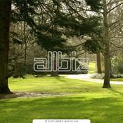 Благоустройство территории, освоение участка, ландшафтный дизайн фото