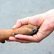Профессиональная дрессировка молодых собак и воспитание щенков фото