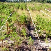 Очистка леса от подроста фото