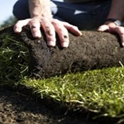 Устройство посевного и рулонного газона фото