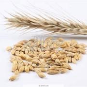 Выращивание семян сельскохозяйственных культур фото