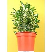 Средство защиты растений от вредителей фото