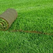 Укладка брусчатки и газоны в рулонах фото
