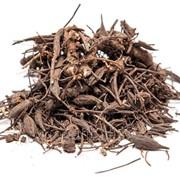 Лабазник вязолистный (корень) 50г фото
